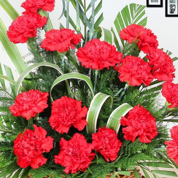 25 Red Carnations in Zoomed View