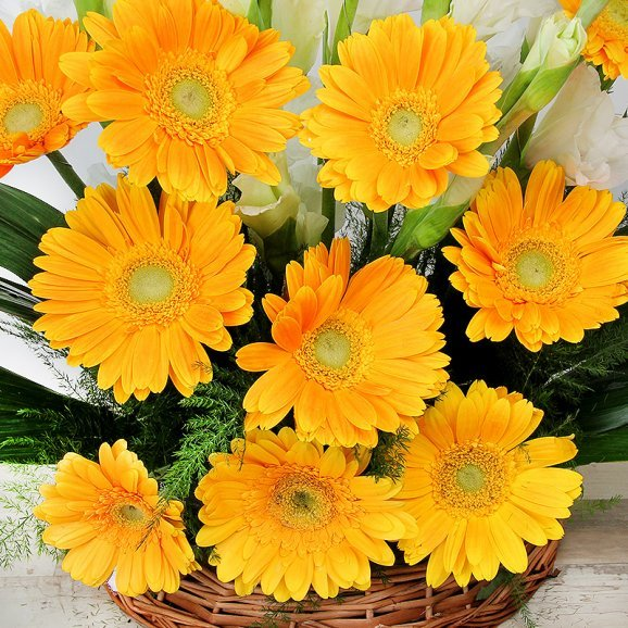 15 yellow Gerberas and 10 White Glads in Basket with Zoomed View