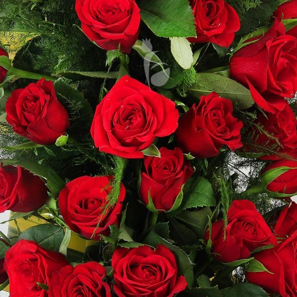 Long arrangement of 150 red roses in Zoomed View