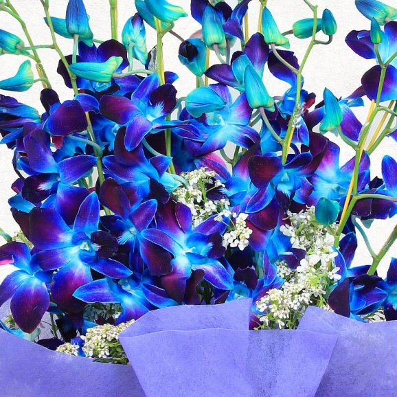 12 Blue Orchids in Zoomed View