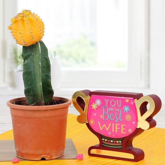Combo of Moon Cactus and You Are The Best Wife Trophy
