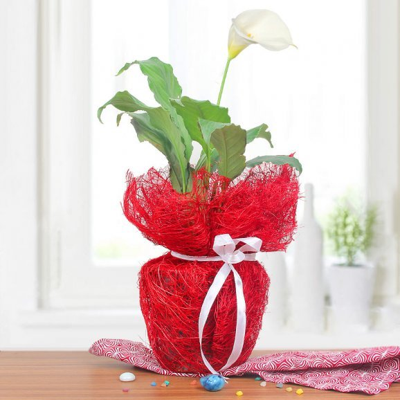 Peace Of Mind - A Peace Lily Plant Gift