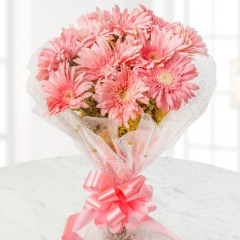 10 Pink Gerberas Bunch