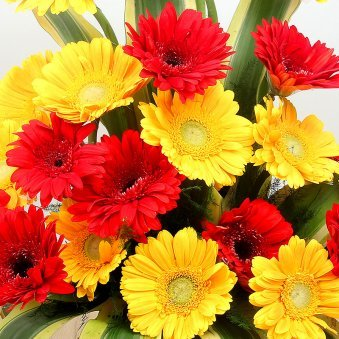 20 Red and Yellow Geberas Arrangement in Zoomed in View
