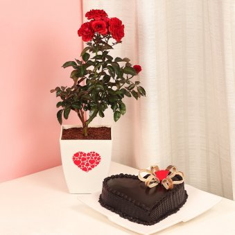 Red Rose Love Plant with Truffle Cake Combo