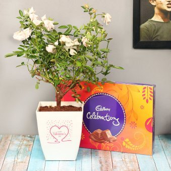 White Rose Valentine Plant with Celebrations pack Combo