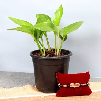 Plant and Friendship Band Combo