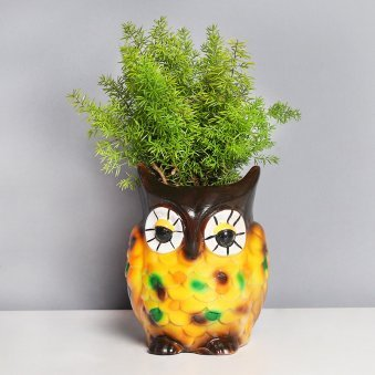 Foxtail Fern Plant in Owl Pot