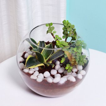 MILT and Jade Plant Terrarium