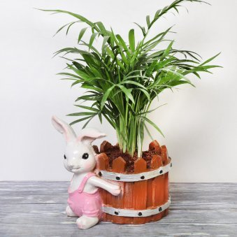 Parlour Palm Plant in Rabbit Vase
