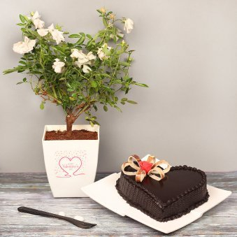 White Rose Plant with Heart Shaped Chocolate Cake Combo