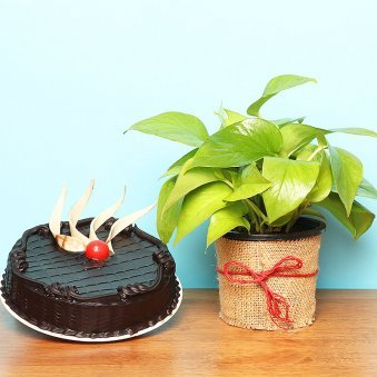 Money Plant with Truffle Cake Combo