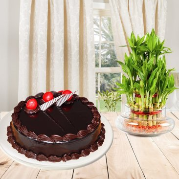 Everlasting Smiles Combo - A gift hamper of half kg Choco Truffle eggless cake and 2 layer lucky bamboo